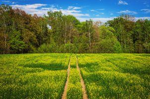 Бесплатные фото поле, дорога, весна, цветы деревья, лес, цветение пейзаж