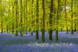 Зеленый лес · бесплатное фото