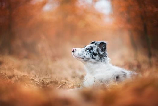 Puppy and autumn · free photo