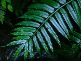 Фото бесплатно ветка, лист, капли