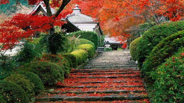 Photo free autumn, garden, Japan