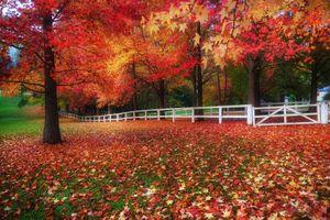 Фото бесплатно деревья, природа, листва