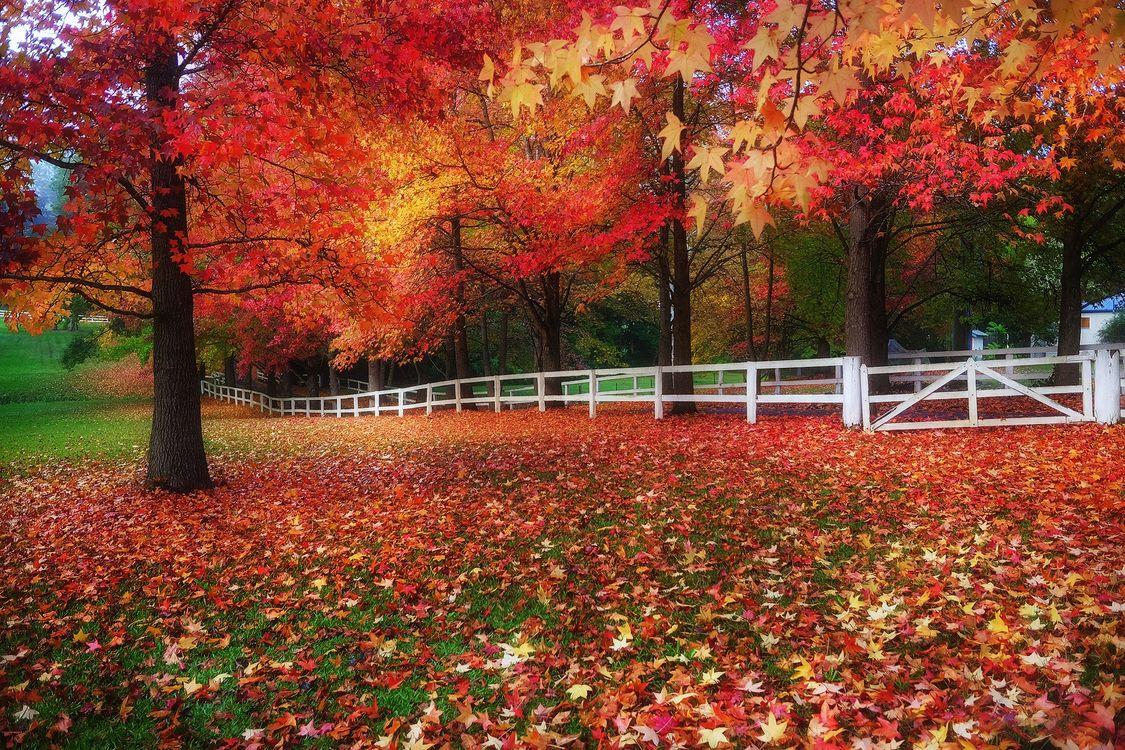 Фото бесплатно деревья, природа, листва - на рабочий стол