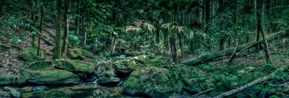 Фото бесплатно Panorama, Strickland State Forest on the Central Coast of NSW, Australia