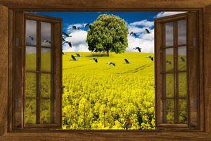 Бесплатные фото поле,дерево,окно,цветы,птицы,природа,art