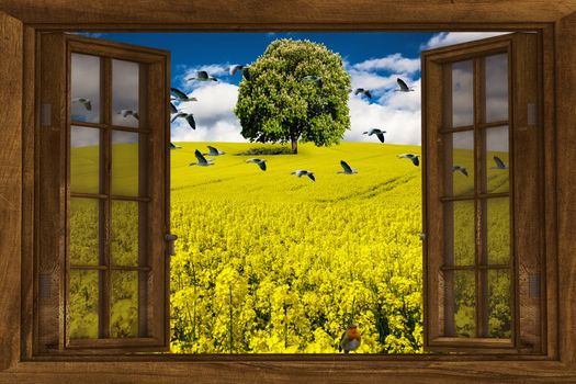 Бесплатные фото поле,дерево,окно,цветы,птицы,природа,art,рапс,пейзаж,blossom