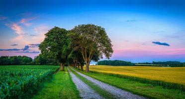 Фото бесплатно поле закат, дорога, деревья