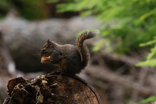 Photo free a tail, squirrel, tree