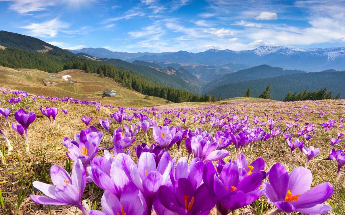 Фото бесплатно облака, гора, цветы - на рабочий стол