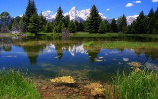 Фото бесплатно отражение, зеро, елки
