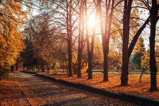 Autumn sunny park · free photo