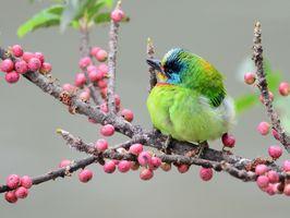 Green bird sitting on a branch · free photo