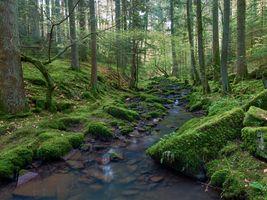 Бесплатные фото лес,деревья,речка,ручей,камни,мох,природа