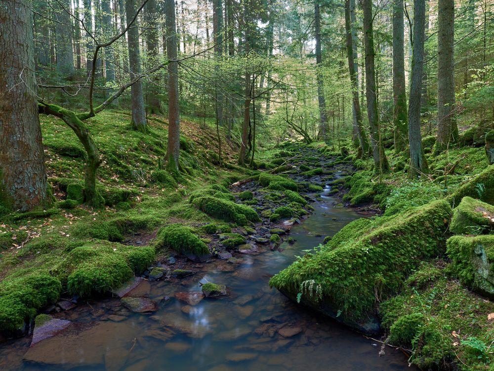 Фото бесплатно лес, деревья, речка, ручей, камни, мох, природа, пейзаж, пейзажи