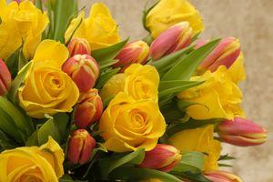 Фото бесплатно флора, икебана, тюльпаны