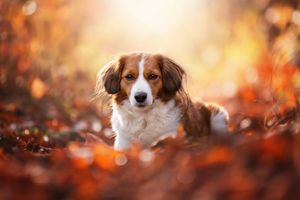 Коикерхондье и осенняя листва · бесплатное фото