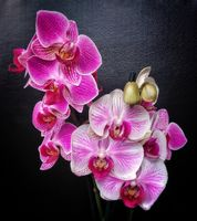 Photo free Orchid, orchids, flower