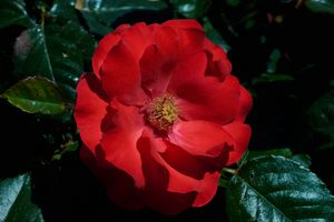 Фото бесплатно цветы, цветочная композиция, макро