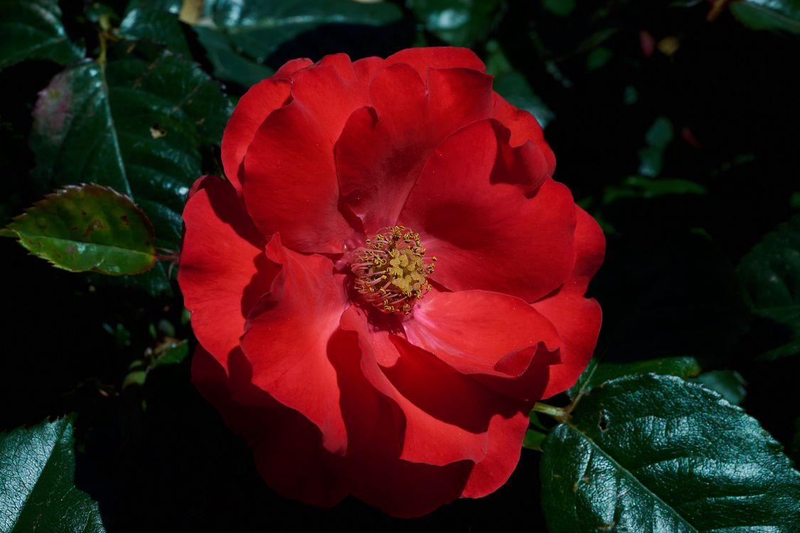 Фото бесплатно цветы, цветочная композиция, макро - на рабочий стол
