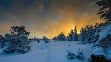 Бесплатные фото закат,зима,снег,лыжня,деревья,природа,пейзаж