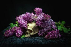 Фото бесплатно букет сирени, цветы, сирень