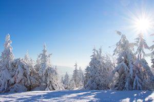 Снежная зима в лесу