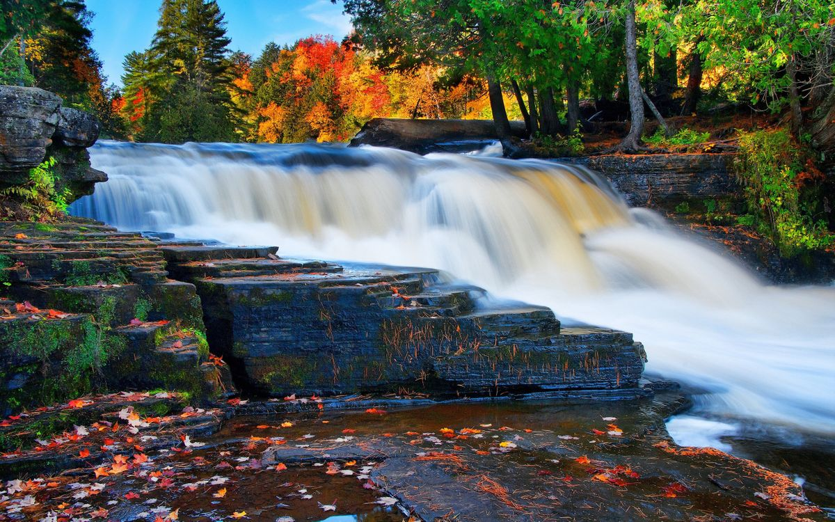 Осенний лес с водопадом · бесплатное фото