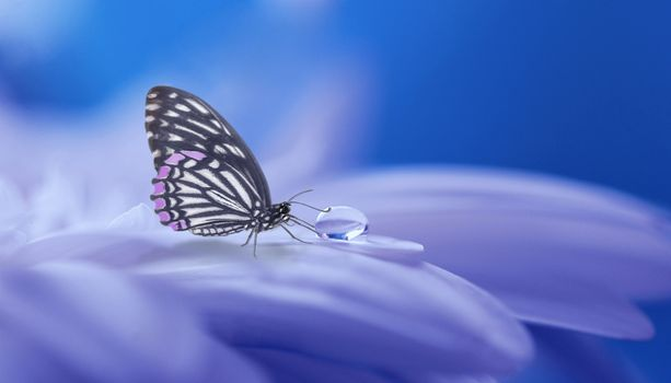Photo free flower, butterfly, drop