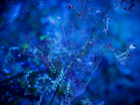 Фото бесплатно природа, растения, роса