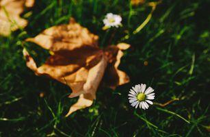 Фото бесплатно Белый цветок, листья, трава
