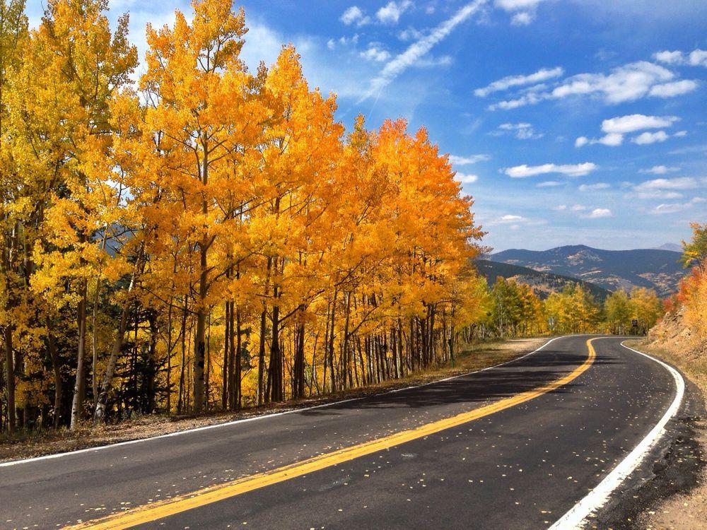 Обои осень, природа, дуб картинки на телефон