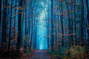 Заставки туман, пейзаж, цвета осени