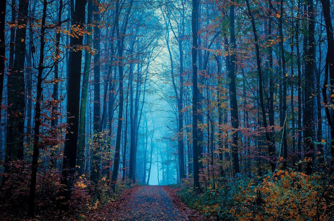 Фото бесплатно туман, пейзаж, цвета осени - на рабочий стол