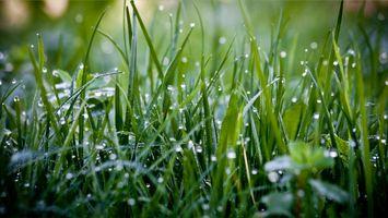 роса на траве
