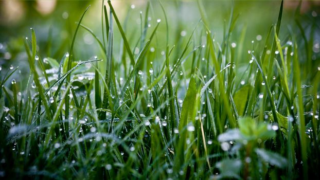 dew on the grass · free photo