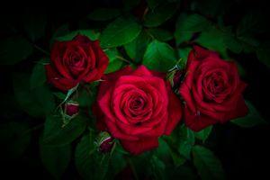 Фото бесплатно красивые цветы, букет, цветы