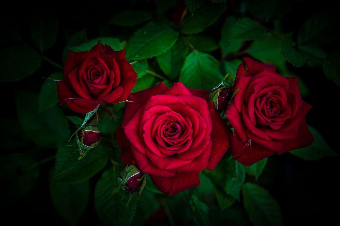 Фото бесплатно красивые цветы, букет, цветы - на рабочий стол