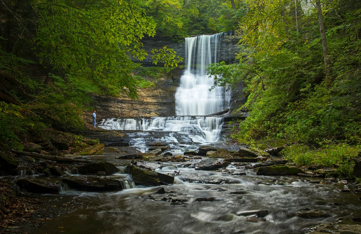 Обои лес, природа ручей, вода картинки на телефон
