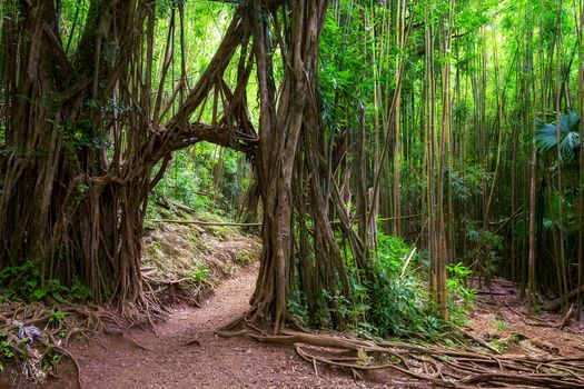 Photo free Bamboo forest, Forest walk, Manoa