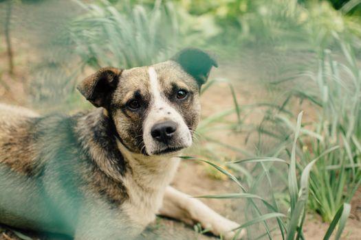 Фото бесплатно собака, лежа, растения