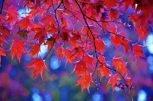 Photo free autumn, October, autumn leaves
