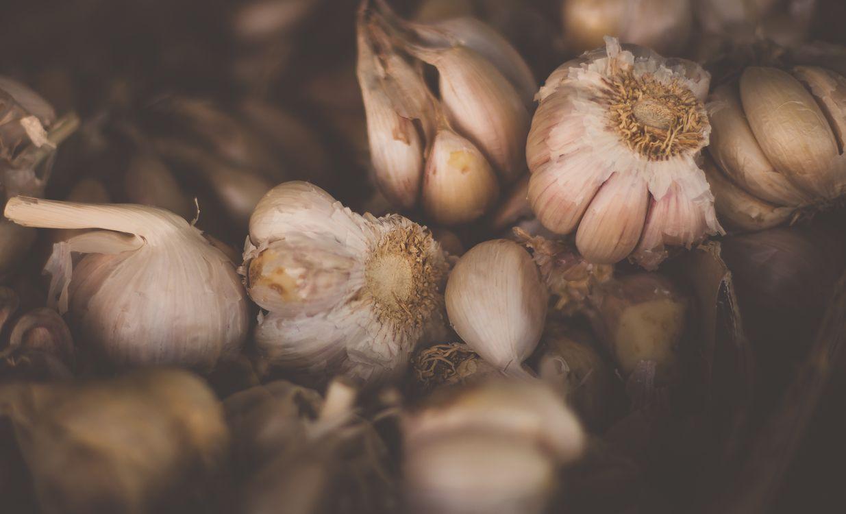 Фото бесплатно растение, цветок, пища - на рабочий стол