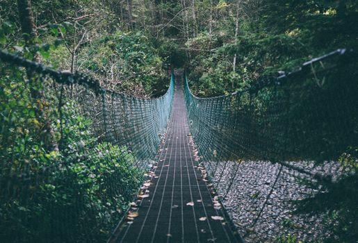 Photo free rope bridge, forest, trees