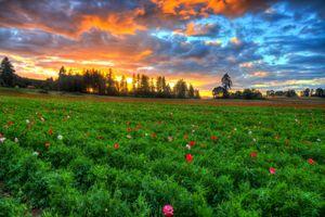 Бесплатные фото закат,поле,цветы,деревья,небо,облака,пейзаж