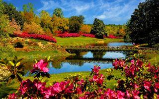 Фото бесплатно парк, ручей, мосты