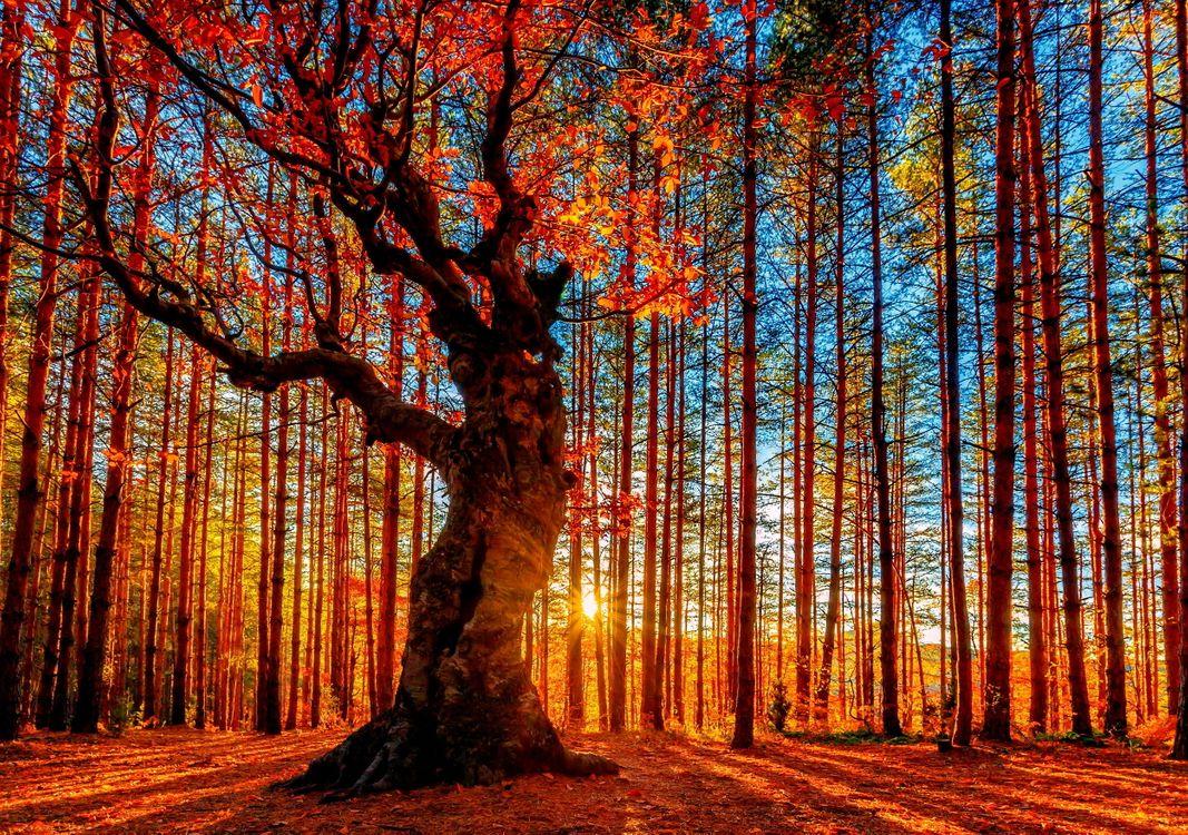 Восход солнца в осеннем лесу · бесплатное фото