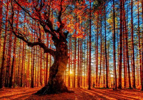 Восход солнца в осеннем лесу