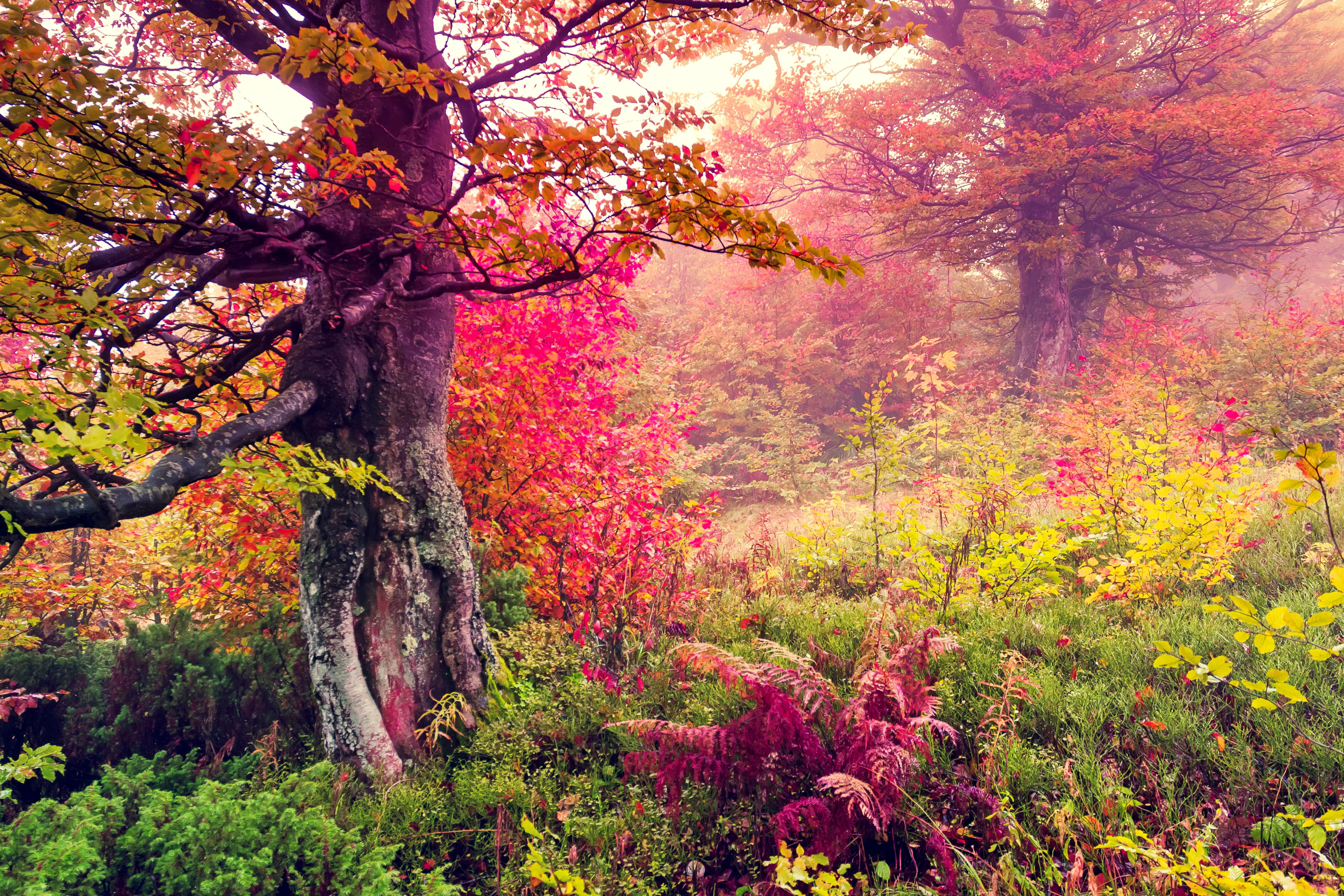 Photos For Free Forest Tree Landscape To The Desktop