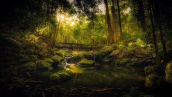 Фото бесплатно Kondalilla National Park forest walk in Queensland, лесной мостик, заброшенный