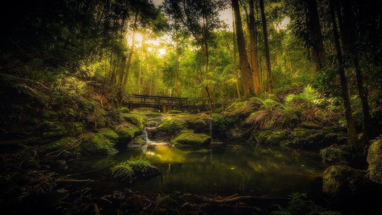 Фото бесплатно Kondalilla National Park forest walk in Queensland, лесной мостик, заброшенный, Australia, речка, водопад, лес, деревья, мост, камни, мох, природа, пейзаж, пейзажи
